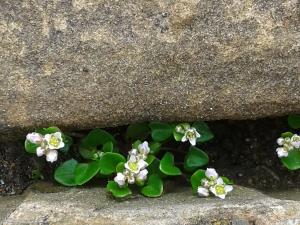 Hiding Flowers